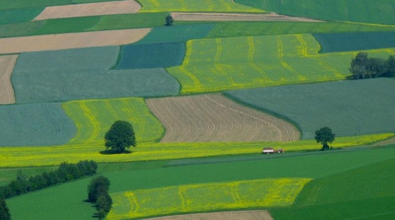 Гектар по 75 тыс. грн: эксперт назвал регионы с самой дорогой землей