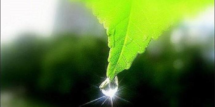 Экологическая обстановка в зоне расположения ЮУАЭС Подробнее читайте на Юж-Ньюз: http://xn----ktbex9eie.com.ua/archives/9694