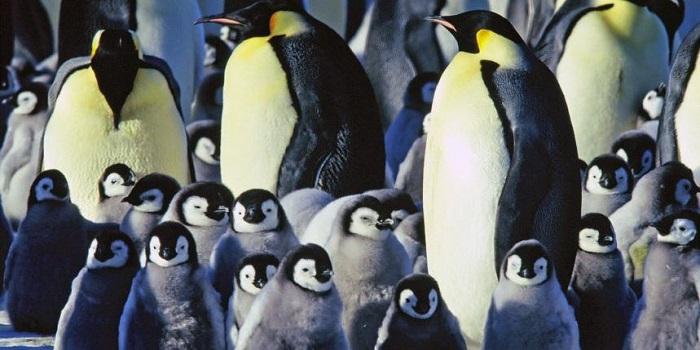 В Антарктиде глобальное потепление убило колонию императорских пингвинов Подробнее читайте на Юж-Ньюз: http://xn----ktbex9eie.com.ua/archives/49551
