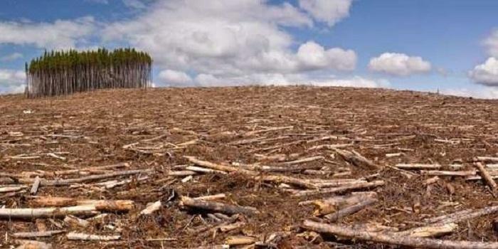 В Украине ужесточили наказание за незаконную вырубку леса Подробнее читайте на Юж-Ньюз: http://xn----ktbex9eie.com.ua/archives/51712