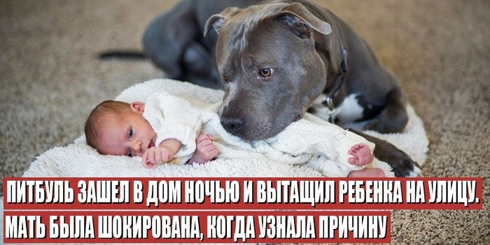 Питбуль спас ребёнка, рискуя своей жизнью: тащил из пламени за памперс (видео) Подробнее читайте на Юж-Ньюз: http://xn----ktbex9eie.com.ua/archives/55689