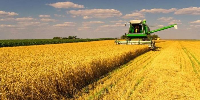 На полях Николаевской области начали уборку урожая Подробнее читайте на Юж-Ньюз: http://xn----ktbex9eie.com.ua/archives/54625