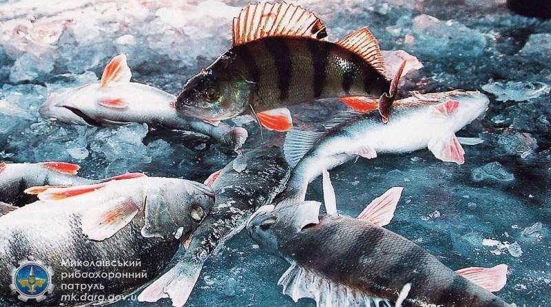 Николаевский рыбоохранный патруль предупреждает о запрете на вылов рыбы Подробнее читайте на Юж-Ньюз: http://xn----ktbex9eie.com.ua/archives/67068