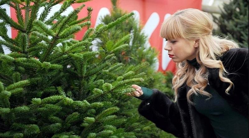 Новогодняя афера: жительница Южноукраинска хотела в Интернете купить елки и осталась без денег Подробнее читайте на Юж-Ньюз: http://xn----ktbex9eie.com.ua/archives/69436
