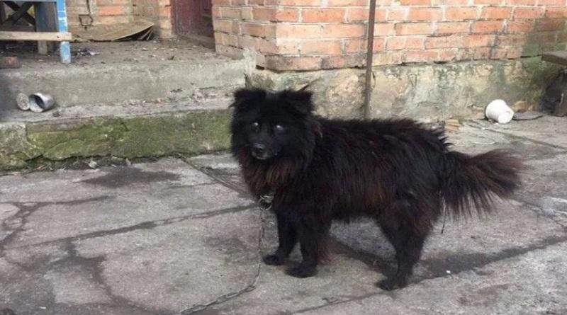Журналисты нашли собаку, которую нардеп предложил пенсионерке продать, чтобы оплатить коммуналку Подробнее читайте на Юж-Ньюз: http://xn----ktbex9eie.com.ua/archives/72442