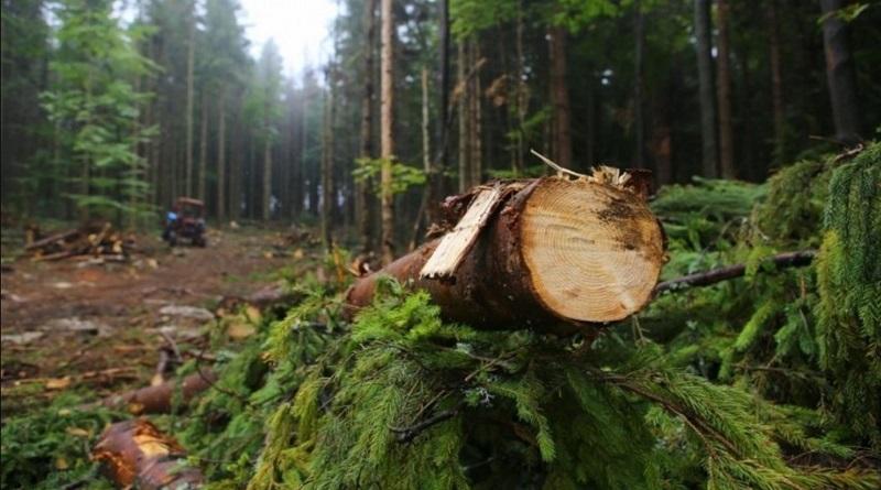 В Украине объемы незаконной вырубки леса возросли в семь раз — Гослесагентство Подробнее читайте на Юж-Ньюз: http://xn----ktbex9eie.com.ua/archives/74311