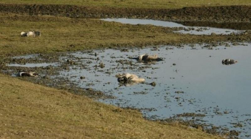 В заповеднике «Аскания-Нова» вымерло около 200 краснокнижных журавлей