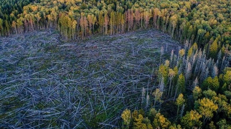 За последние 30 лет в мире было уничтожено около 420 миллионов гектаров леса - ООН