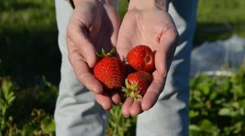 Главные правила огородника: ошибки, которых нужно избегать ради щедрого урожая