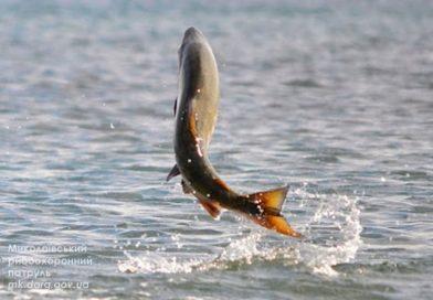 С 1 апреля — запрет: где и в какие сроки в Николаевской области нельзя ловить рыбу