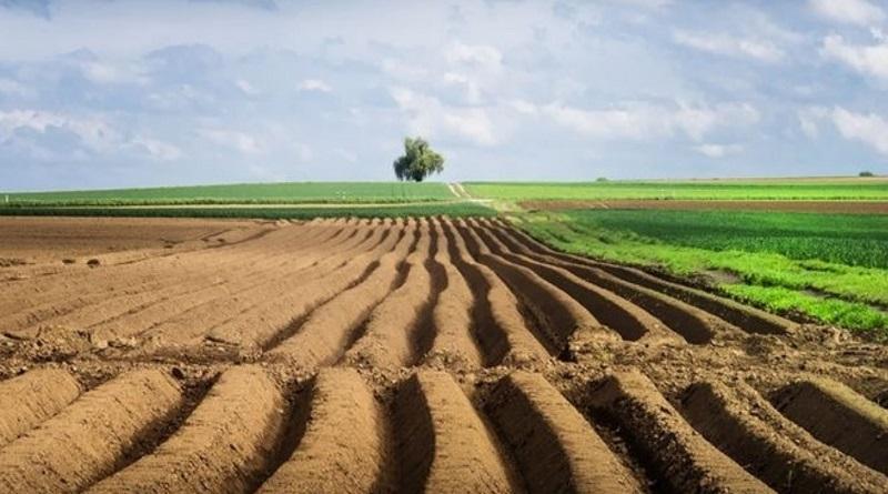 Фермер не сможет купить украинскую землю после открытия рынка - Ассоциации фермеров Украины