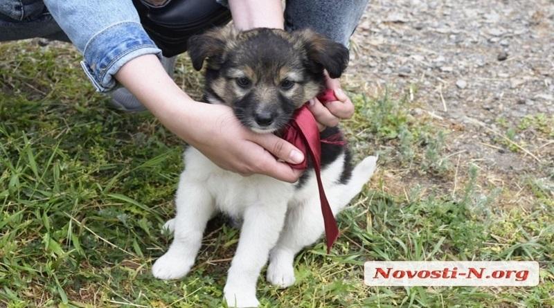 В Николаеве благодаря акции за день 11 бездомных собак обрели хозяев