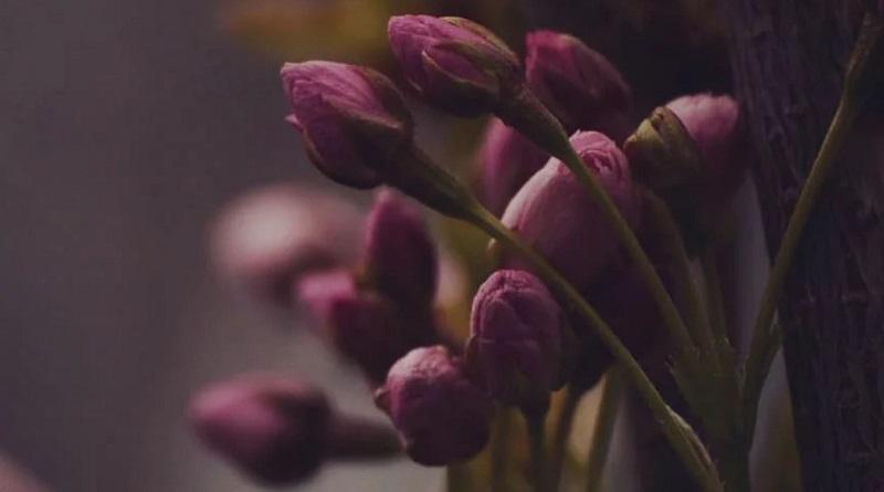 Весна. Любушское воеводство. Фото. Вита Тихонова.