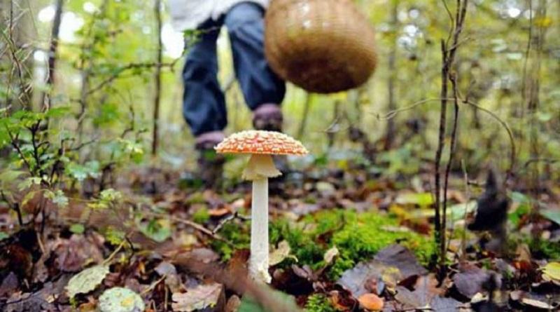 В Николаевской области дети попали в больницу после отравления грибами