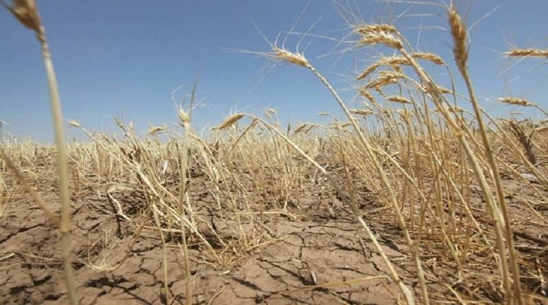 В ближайшие 30-40 лет более 60% украинских земель грозит опустынивание, - Кабмин