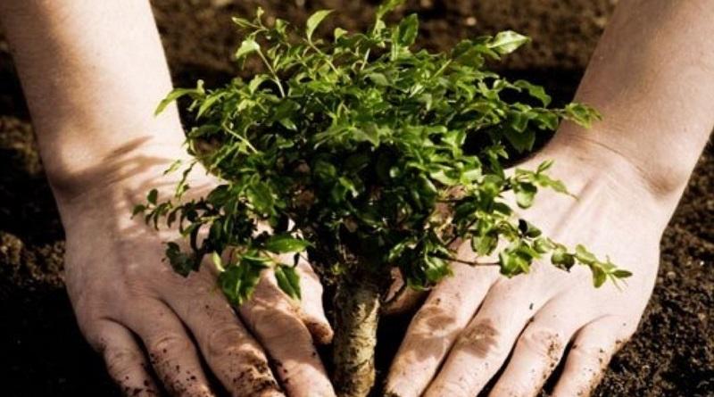 Зеленский пообещал посадить миллиард деревьев в Украине: по 10 каждую секунду