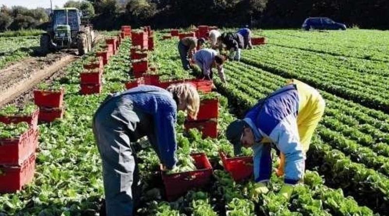 Сбор ягод: сколько платят заробитчанам за неквалифицированный труд