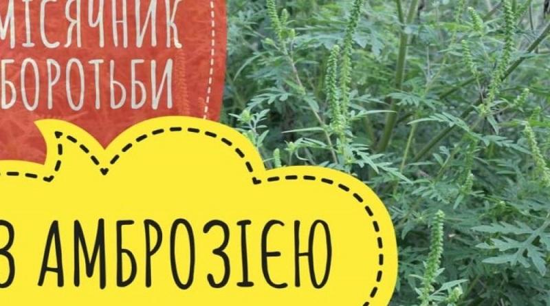 15 июля 2021. В Первомайске объявлен месячник борьбы с амброзией