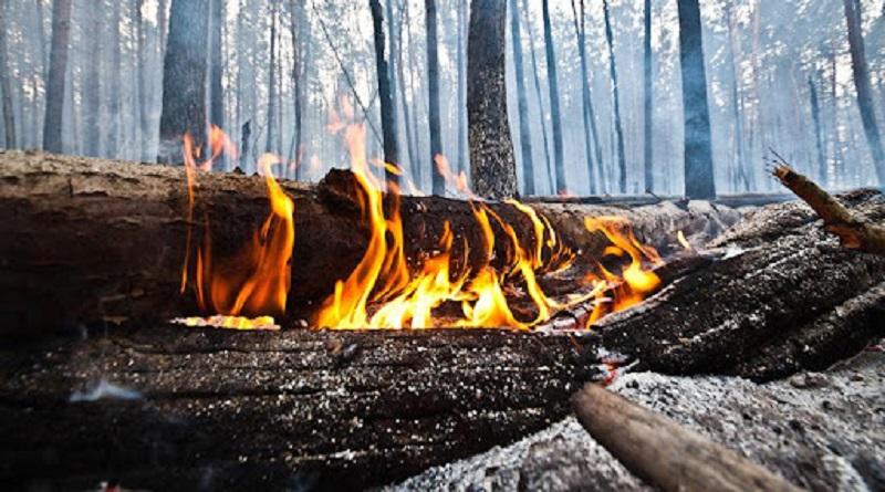 В Украине введен чрезвычайный уровень пожарной опасности