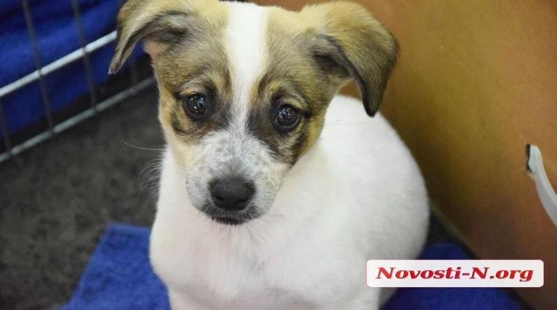 «У счастья нет породы!» - в Николаеве прошла выставка бездомных собак. ФОТО