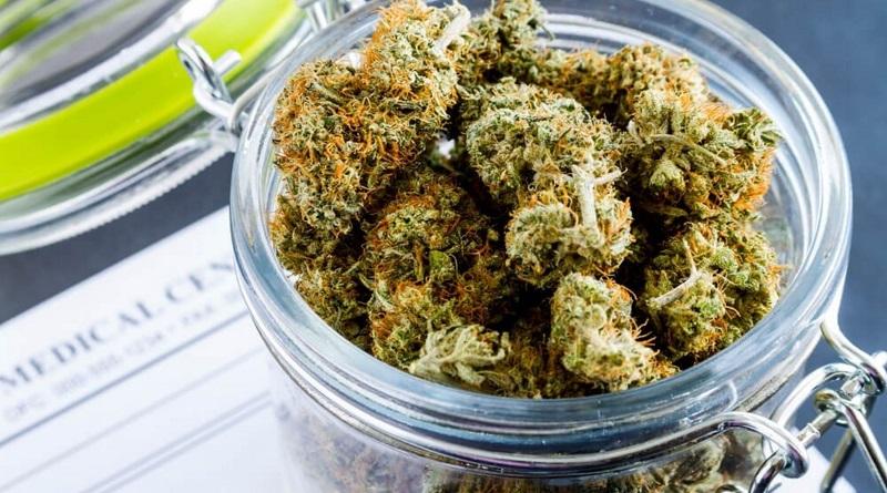 Продажа медицинского каннабиса в аптеках: преимущества и опасности декриминализации марихуаны