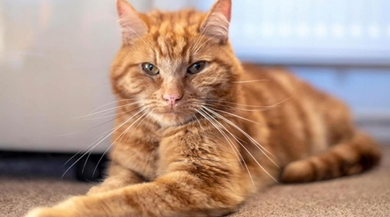 В Британии серийного убийцу котов приговорили к пяти годам заключения