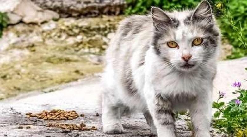 В двух районах Николаевской области выявлены случаи бешенства животных