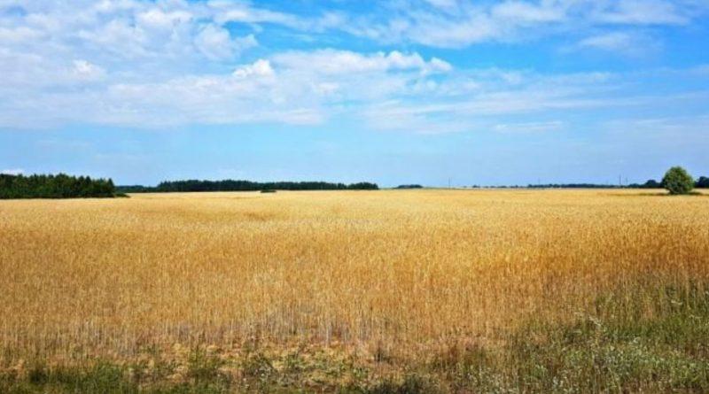 Владельцы земельных участков или паев могут их потерять