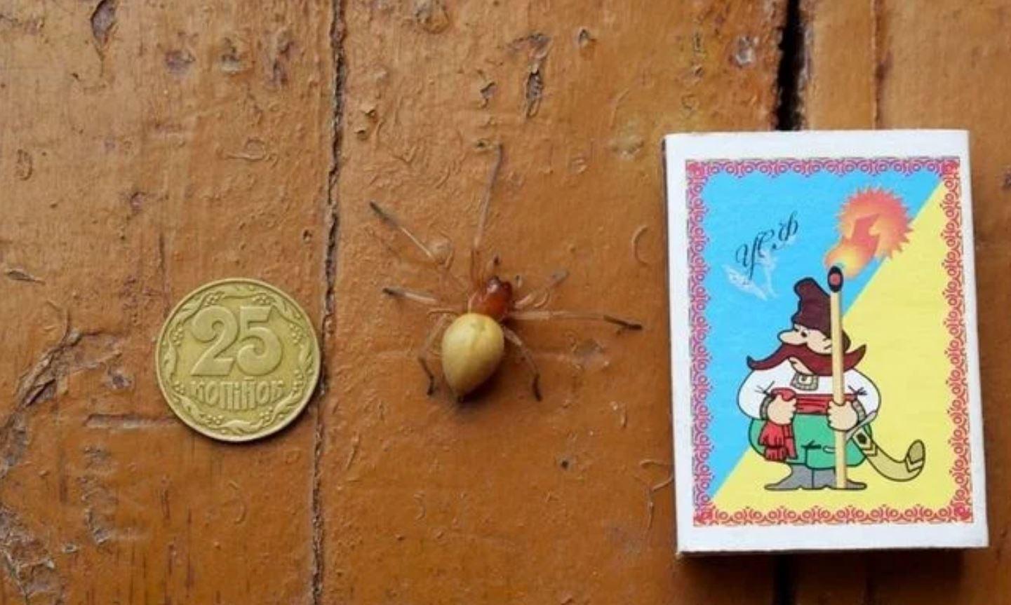 Ядовитые пауки с четырьмя челюстями расплодились в Украине: очень опасен. Фото.