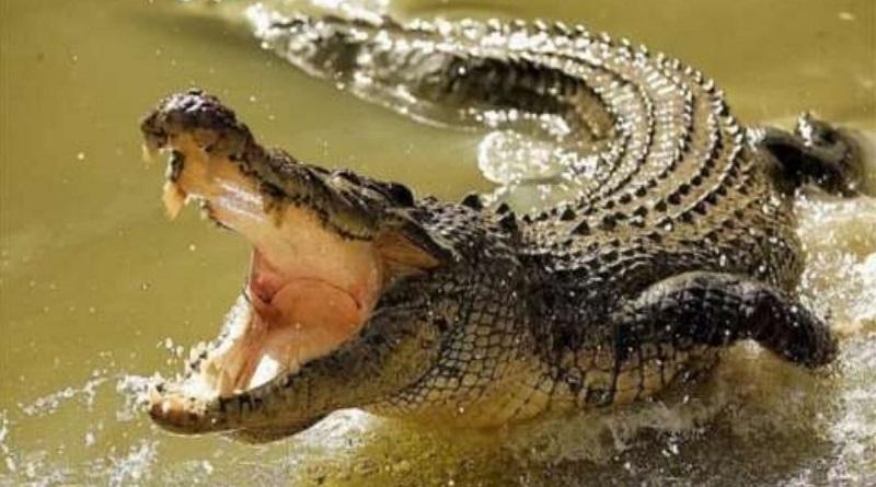 В водоеме на Арабатской стрелке поселился крокодил