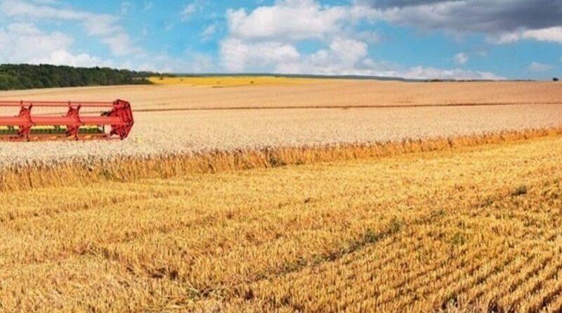 Украинские аграрии завершили уборку ранних зерновых: собран рекордный урожай