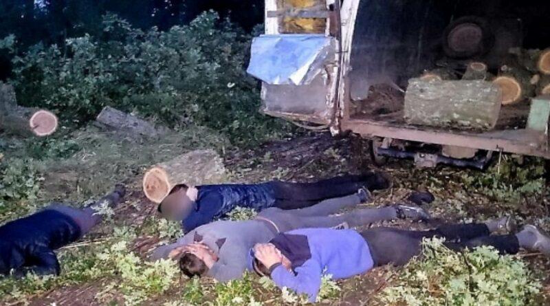 В Николаевской области разоблачили банду «черных лесорубов»