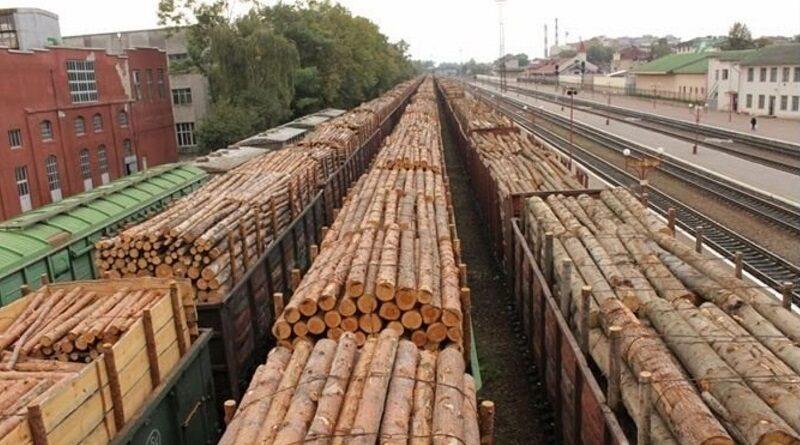 """ЕС требует древесины: """"Слуги народа"""" планируют разрешить продажу украинского леса"""