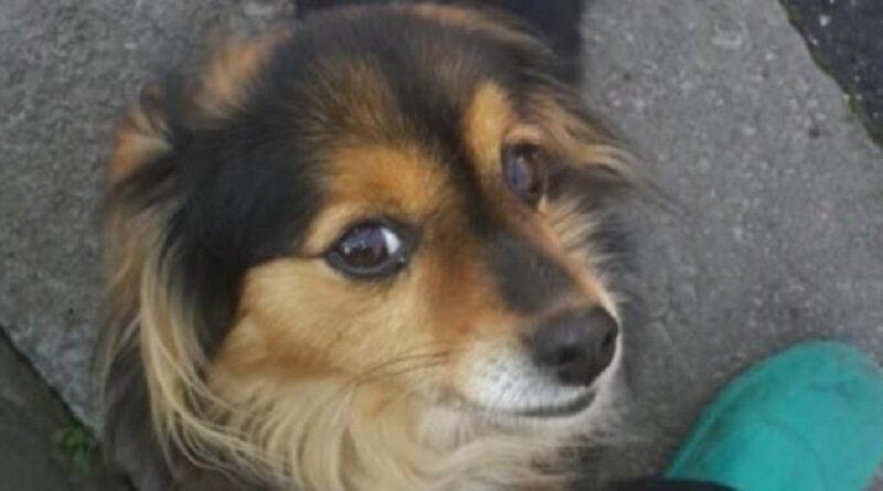 В Николаеве средь бела дня жестоко убили домашнюю собаку