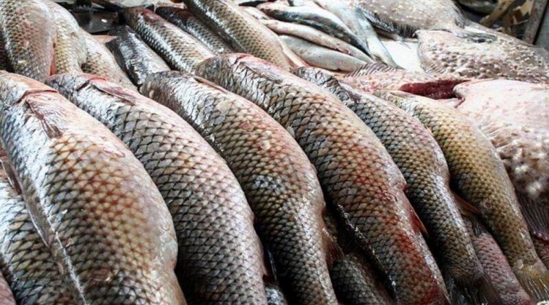 В Украине существенно увеличили штрафы за незаконный вылов рыбы